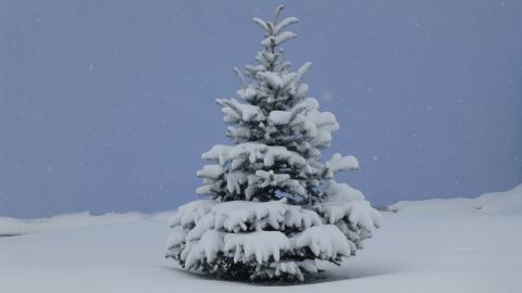 Lütterkusen: Wegen des Schneewetters bleibt mancher Christbaum an der Straße liegen. Foto: Symbolfoto